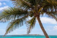 Palm met oceaan en blauwe hemel Stock Afbeeldingen