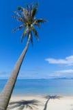 Palm met schaduw op het strandzand Stock Afbeelding