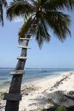 Palm met treden Royalty-vrije Stock Afbeeldingen