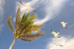 Palm met vliegende zeemeeuw stock afbeeldingen