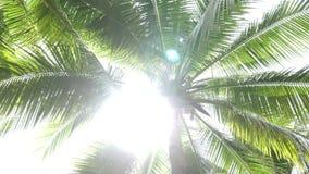 Palm met zon die door bladeren glanzen stock footage