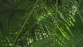 Palm met zon die door bladeren glanzen E stock videobeelden