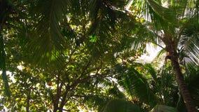 Palm met zon die door glanzen stock videobeelden
