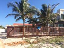 Palm. Mexico life, sunshine, yucatan Royalty Free Stock Photos
