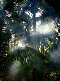 Palm Mist. Mist in palm trees in early morning in the Indian Tropics Royalty Free Stock Photos