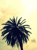 Palm in modern colors Royalty Free Stock Photo