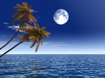 Palm_moon. Coconut palm trees on a beach - 3d illustration. More in my portfolio Stock Image