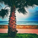 Palm near beach. Palm on a green grass and sea at background Royalty Free Stock Image