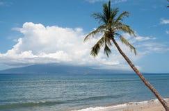 Palm near the ocean coast Royalty Free Stock Image