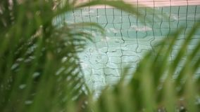 Palm near the pool. Rippling water stock footage
