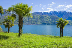 Palm near water, switzerland Stock Photo