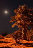 Palm in the night against the moon Stock Photos