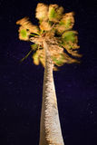 Palm at Night Royalty Free Stock Images