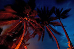 Palm by night Royalty Free Stock Image