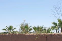 Palm nurseries royalty free stock image