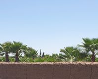 Palm nurseries royalty free stock images