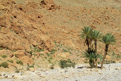 Palm oasis in Atlas mountains Royalty Free Stock Photos
