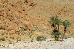 Palm oasis in Atlas mountains Royalty Free Stock Photos