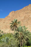 Palm oasis in dry desert mountains in north Africa Stock Photos