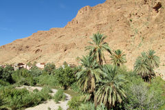 Palm oasis in dry desert mountains in north Africa Royalty Free Stock Images