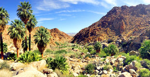 Palm oasis in Joshua Tree National Park Stock Image