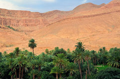Palm oasis in Morocco. Palms of an oasis in the desert near the Atlas mountain in Morocco stock photography