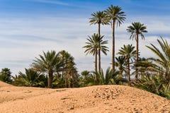 Palm oasis in Sahara desert Stock Images