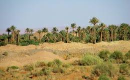 Palm oasis Stock Image