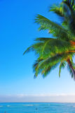 Palm and ocean Royalty Free Stock Image
