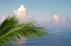 Palm and ocean Royalty Free Stock Photos