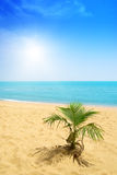 Palm and ocean Royalty Free Stock Photo