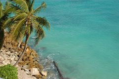 Palm and ocean in Nassau, Bahamas Stock Photo