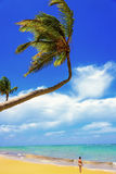 Palm Ocean Sky Stock Photos
