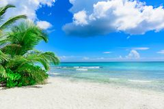Palm Ocean Sky Royalty Free Stock Photo