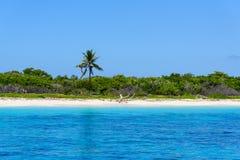 Palm Ocean Sky Stock Image