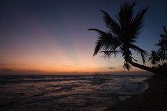 Palm and ocean on sunset Stock Images