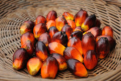 Palm Oil Stock Image