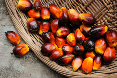 Palm Oil Royalty Free Stock Images