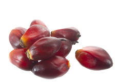 Palm oil Royalty Free Stock Photography