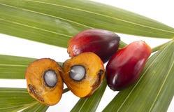 Palm oil. Fruit on white background stock photos