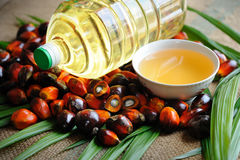 Palm Oil fruits Royalty Free Stock Photos