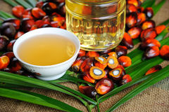 Palm Oil fruits royalty free stock image