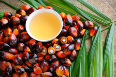 Palm Oil Fruits Stock Photos