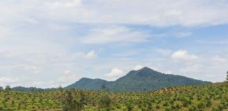 Palm Oil Plantation. In Johor, Malaysia Stock Photo