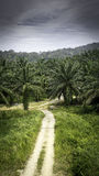 Palm oil plantations Stock Photo