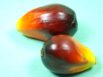 Palm oil seed Stock Photos