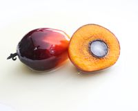 Palm Oil Seed with Seed Structure Stock Image