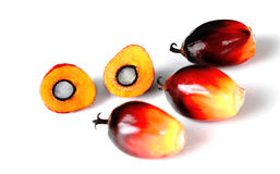 Palm Oil Seed and Seed Structure Royalty Free Stock Photography