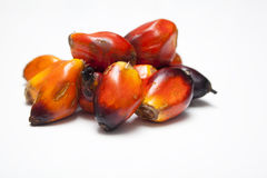 Palm Oil Seeds royalty free stock photos