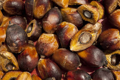 Palm Oil seeds Stock Photography